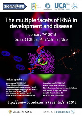the-multiple-facets-of-rna-in-development-and-disease